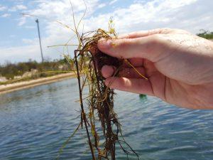 Removing water vegetation in ponds and dams